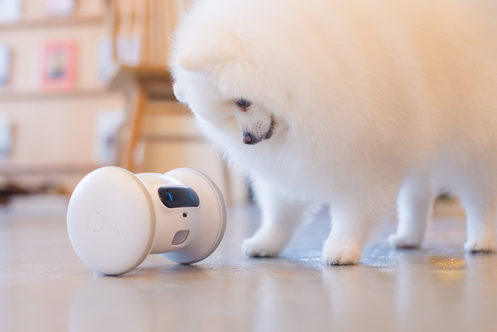 VARRAM Pet Fitness Robot (1)